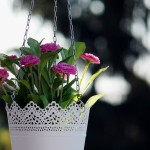 floral-967113_960_720