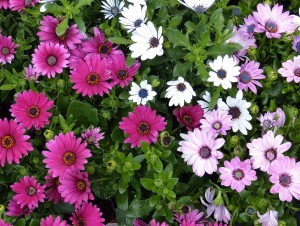 gardening-novice-1