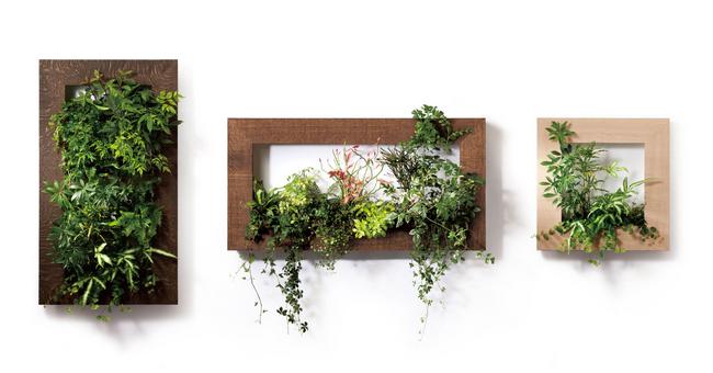 お部屋の壁に緑を!DIYでできる簡単なウォールグリーンの作り方