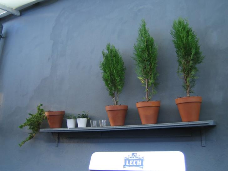 wall-houseplant