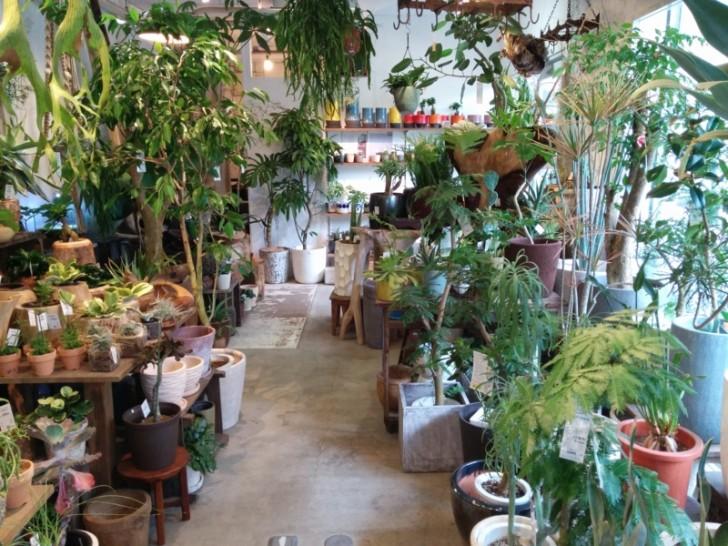 観葉植物を安く手に入れる方法