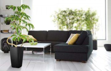 観葉植物 空気清浄