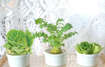 プランターで育てる野菜